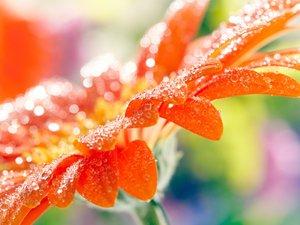 安卓风景 春意盎然 花卉手机壁纸