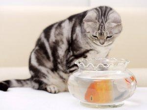 安卓萌宠 喵星人 可爱 宠物 卖萌 搞笑图 憨态百出 猫手机壁纸