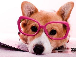 安卓萌宠 汪星人 狗 卖萌 古灵精怪 可爱 觉创摄影 觉创宠物摄影 宠物手机壁纸