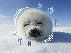 安卓北极熊 可爱 极地动漫 超萌手机壁纸