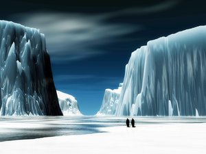 安卓萌宠 动物 可爱 萌物 野生动物 企鹅 极地物种 美丽画面手机壁纸