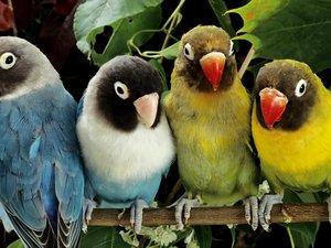 安卓萌宠 动物 可爱 萌物 野生动物 飞禽 小鸟 卖萌图 美丽画面 儿童桌面专用手机壁纸