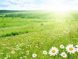 安卓超宽 全景 风景 碧绿草原 春意盎然 mlgb手机壁纸