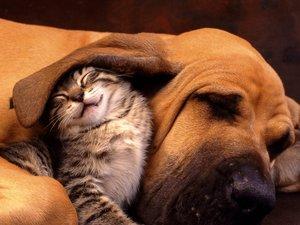 安卓萌宠 动物 可爱 萌物 宠物 喵星人 猫 搞笑图 卖萌图 儿童桌面专用手机壁纸