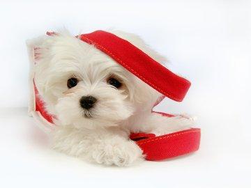 可爱 萌物 宠物 汪星人手机壁纸