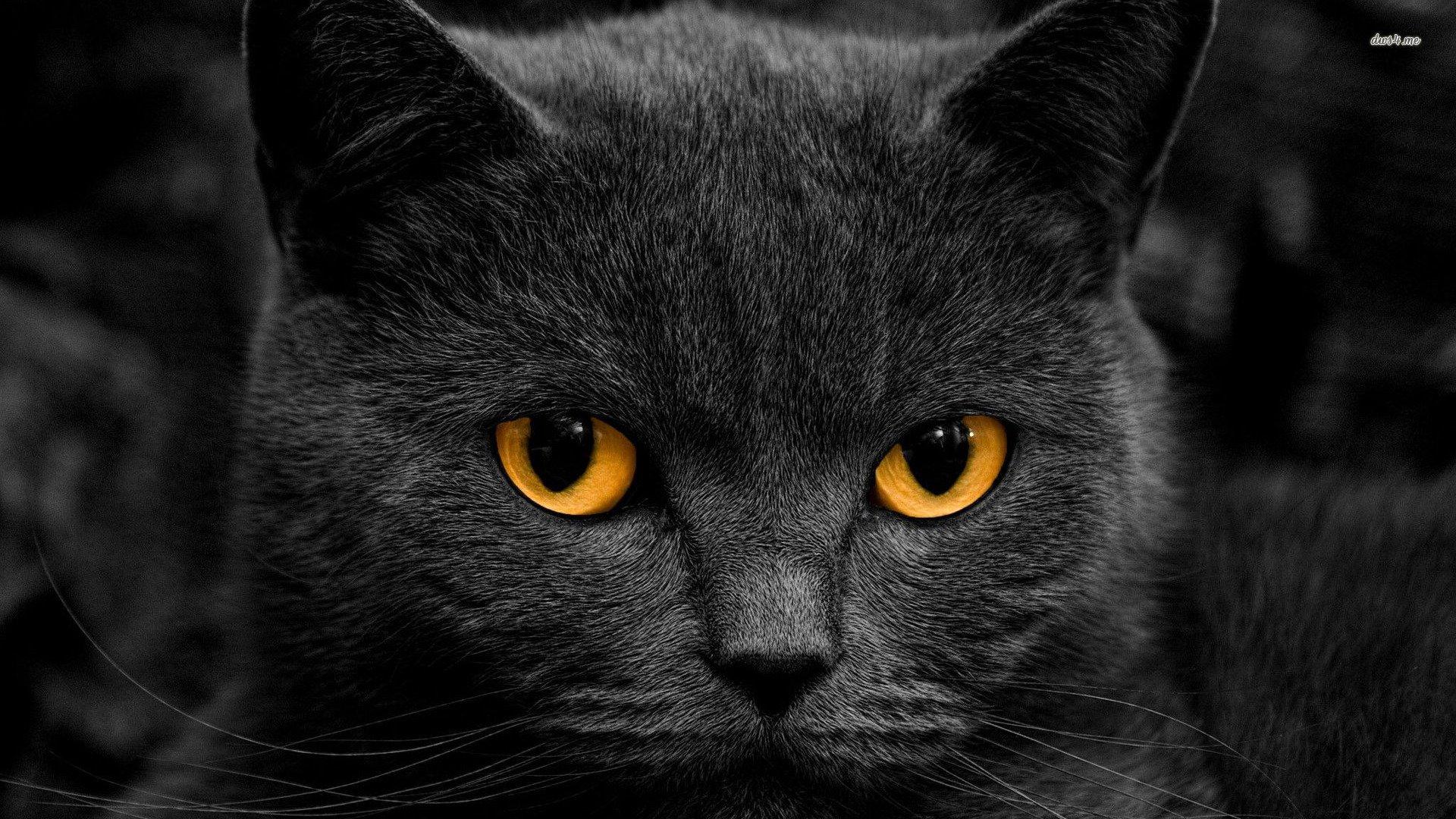 android安卓萌宠 喵星人 猫 黑猫高清手机壁纸免费