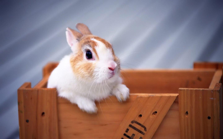 android安卓萌宠 古灵精怪 兔子 可爱 卖萌高清手机