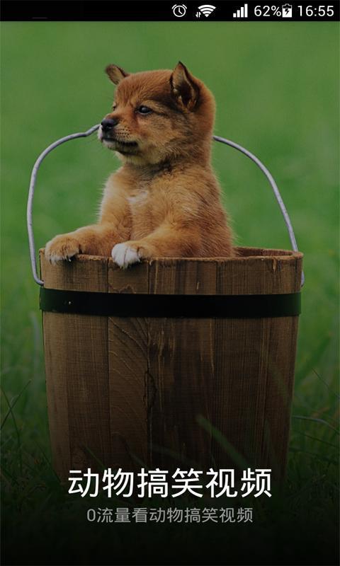给你最新最全最可爱最滑稽小动物的卖萌视频