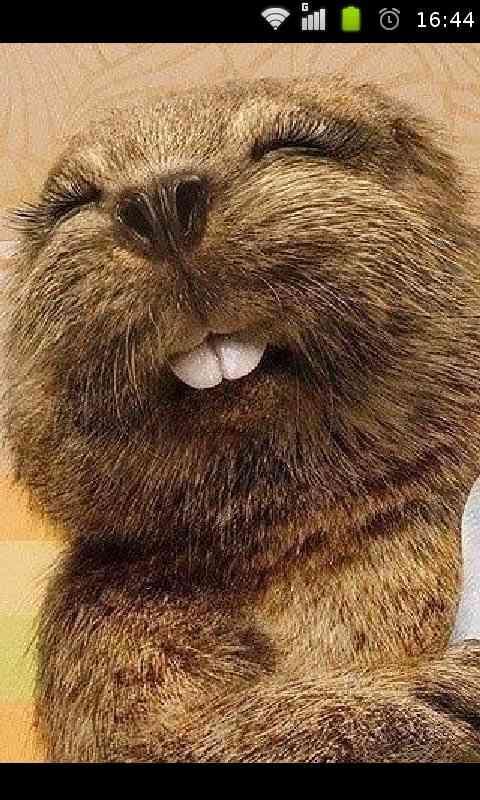 超萌可爱的动物表情