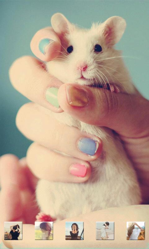 可爱小白鼠-3d桌面壁纸