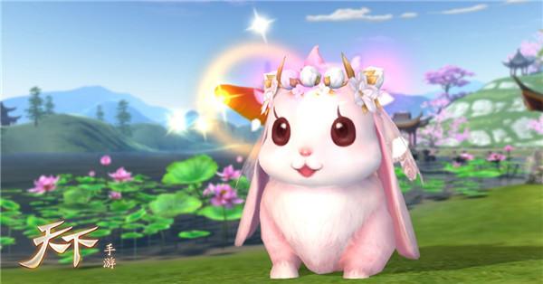 【专属可爱兔兔 软萌闪亮登场】 小兔子,白又白,蹦蹦跳跳惹人爱