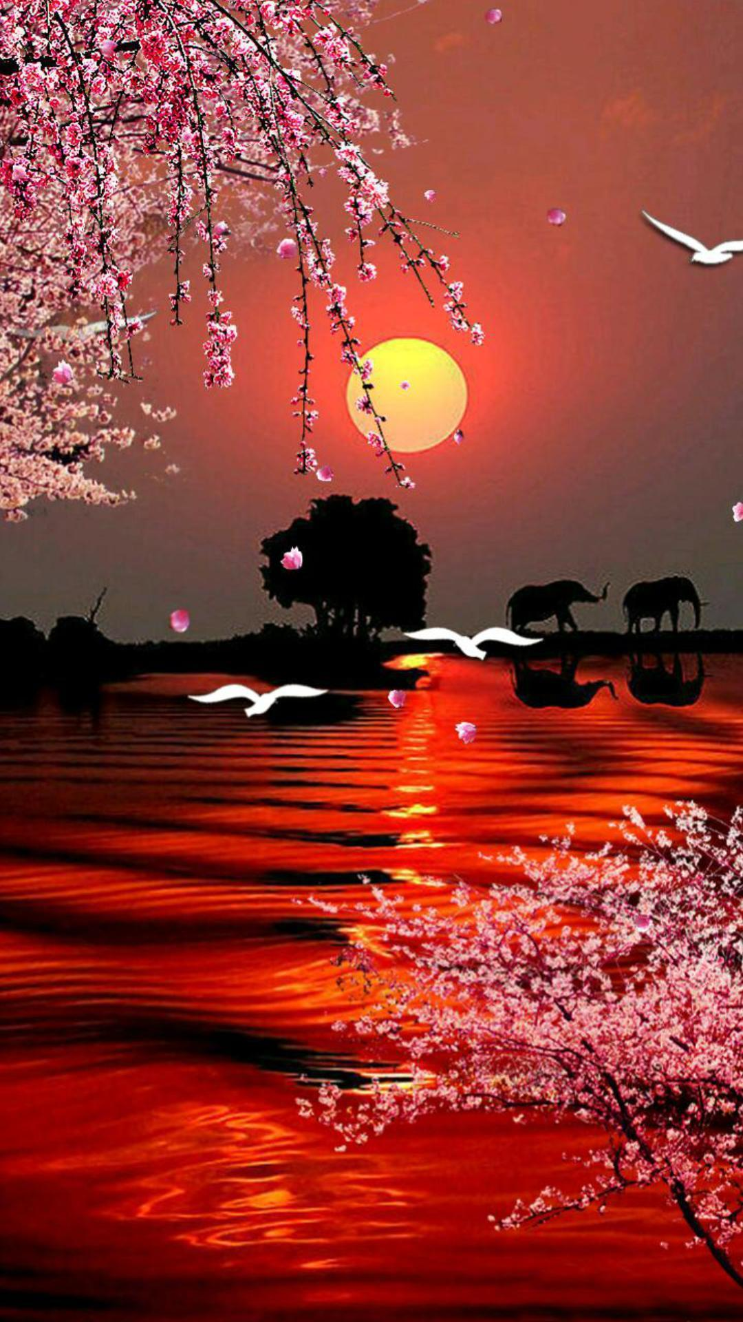 夕阳红主题动态壁纸
